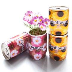 Reklamní rostliny v plechovce - květiny