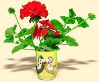 Květiny v plechovce - pelargónie