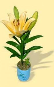 Květiny v plechovce - lilie