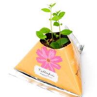 Květiny a bylinky v papírovém květináči s potiskem - Calliopsis (krásnoočko)