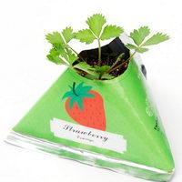 Rostlinky ovoce a zelenina v papírovém květináči s potiskem - jahody