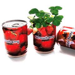 Rostlinky ovoce v plechovce s potiskem - jahody
