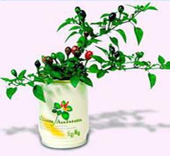 Rostlinky zelenina v plechovce s potiskem - chilli papričky