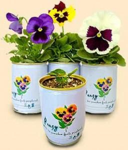 Reklamní rostliny v plechovce