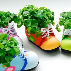 Reklamní rostliny v plechovce široká nabídka